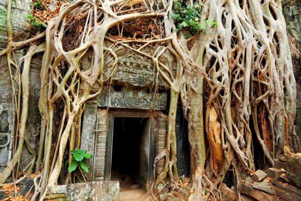 el-imperio-jemer-en-camboya-angkor-wat-arbol
