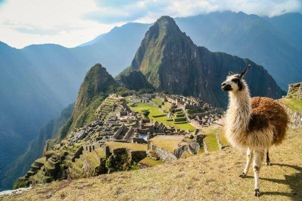 Quienes fueron los incas ganaderia
