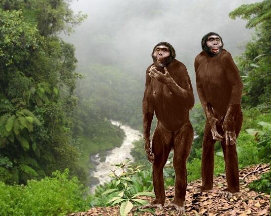 homo-sapiens-alimentacion-evolucion-shelanthropus-tchadensis-reconstruccion