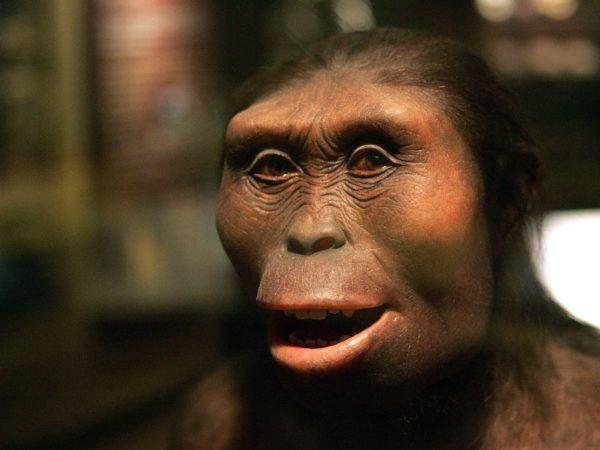 homo-sapiens-australopithecus