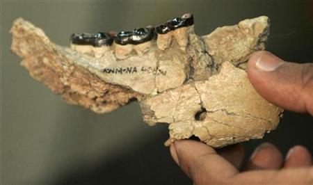 Nakalipithecus Nakayamai, restos de lo que se creé fue el eslabón perdido