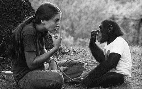 homo-sapiens-alimentacion-diferencias-comunicacion