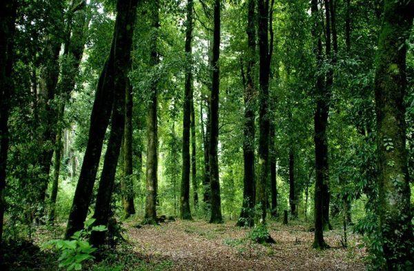 Bosque de Liberum Donum. Iria Flavia