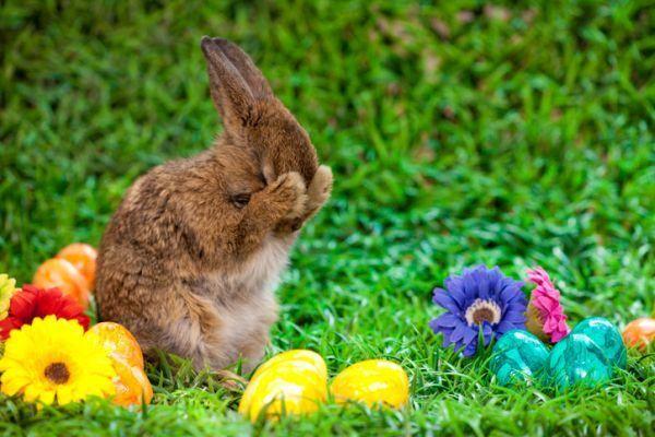 origen-del-conejo-de-pascua-huevos-colores-istock
