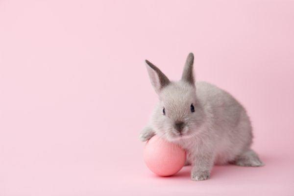 dia-de-la-mona-como-se-celebra-conejo-istock