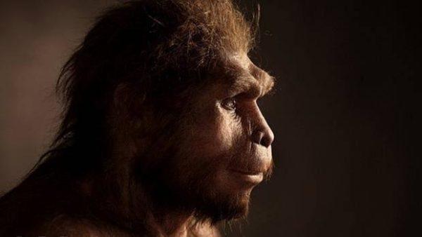 Homo sapiens caracteristicas
