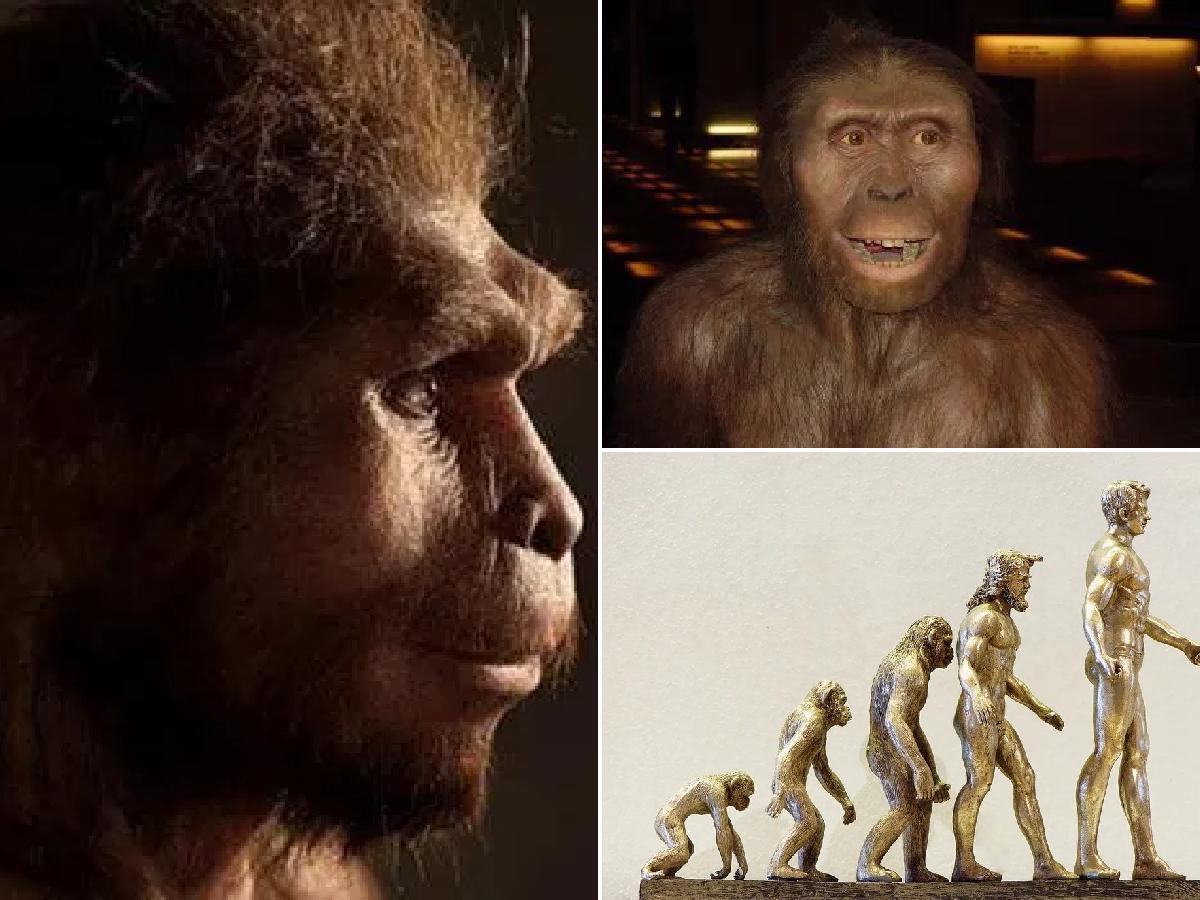 origen y características homo sapiens