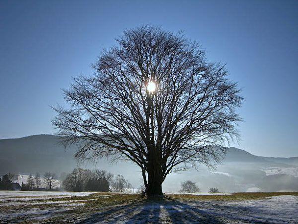 Origen pagano navidad saturnales vikingos
