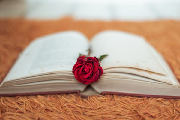 Rosa roja en libro