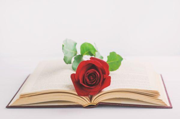 Libro abierto con flor