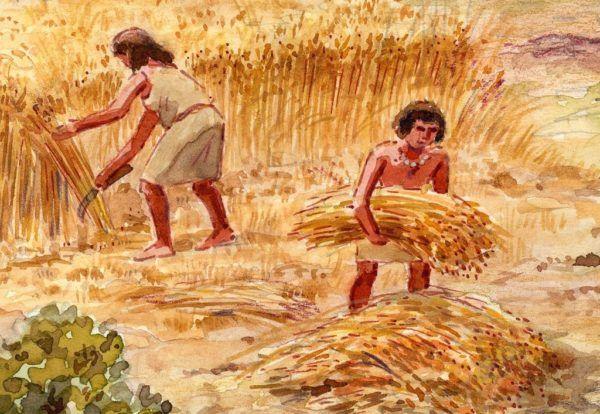 neolitico-los-senores-del-metal-agricultura