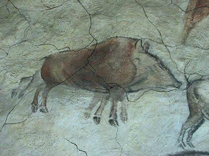 El jabalí fue considerado un animal importante como muestra esta representación de la cueva de Altamira