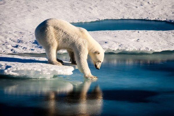 Cambio climatico y la historia artico