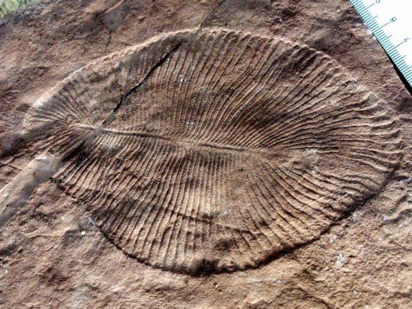 que-es-la-historia-paleontologia