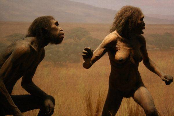 charles-darwin-el-eslabon-perdido-homo-erectus