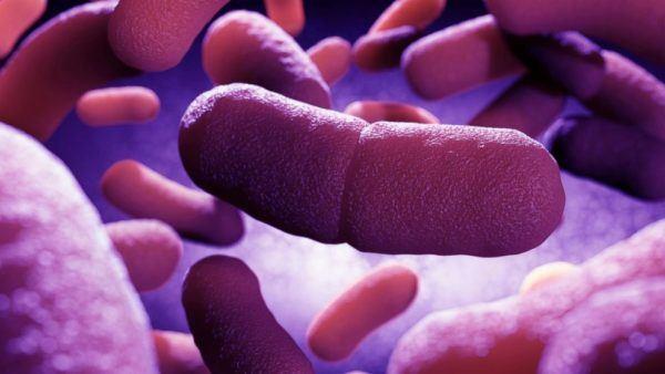 Yersinia pestis, la bacteria que causa la peste