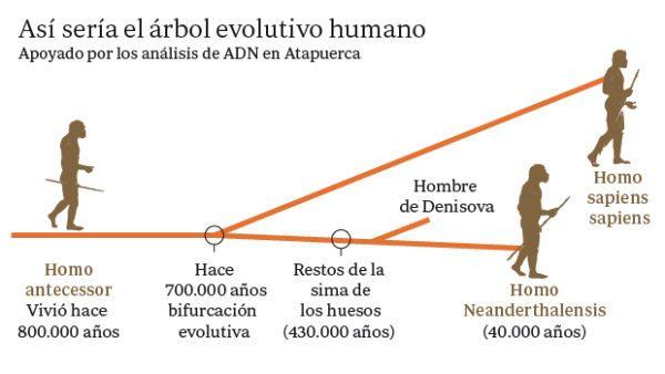 homo-neardenthalensis-adn-atapuerca