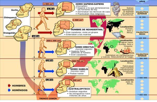 homo-neardenthalensis-arbol