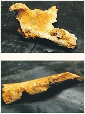 homo-neardenthalensis-huesos-dos