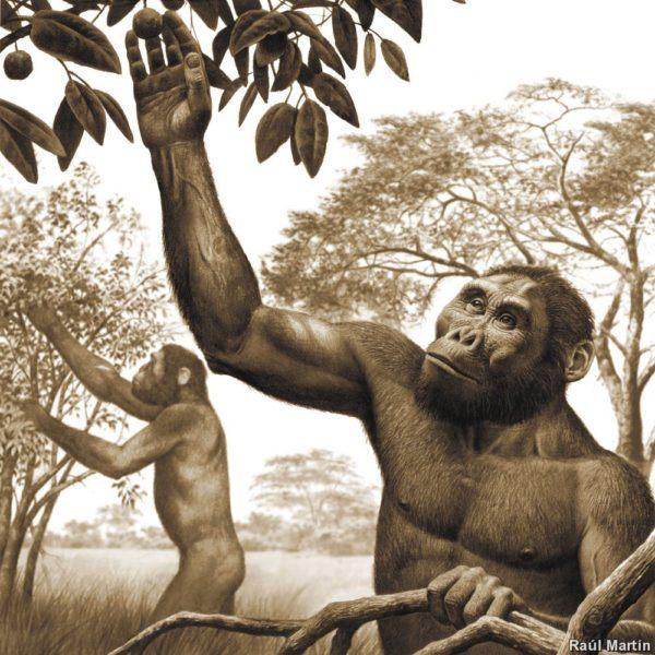 homo-sapiens-alimentacion-australopitecus