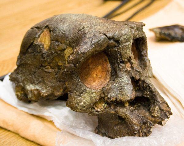 homo-sapiens-alimentacion-evolucion-sshelanthropus-tchadensis
