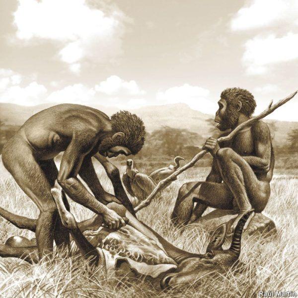 homo-sapiens-homo-habilis