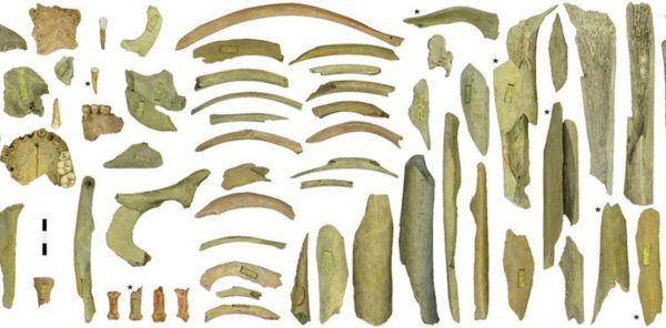 homo-neardenthalensis-croacia-huesos-2