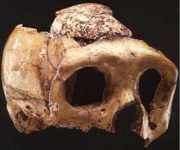 homo-neardenthalensis-zafarraya-craneo-2