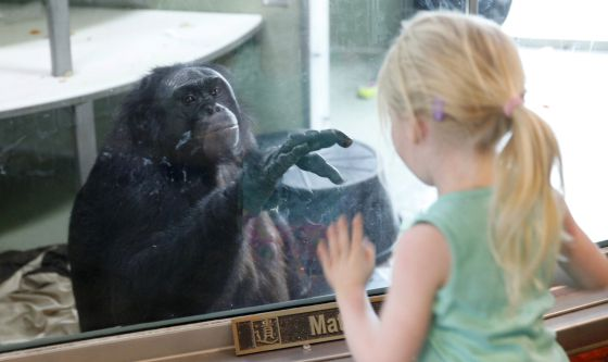 homo-sapiens-alimentacion-diferencias-estudios-chimpances