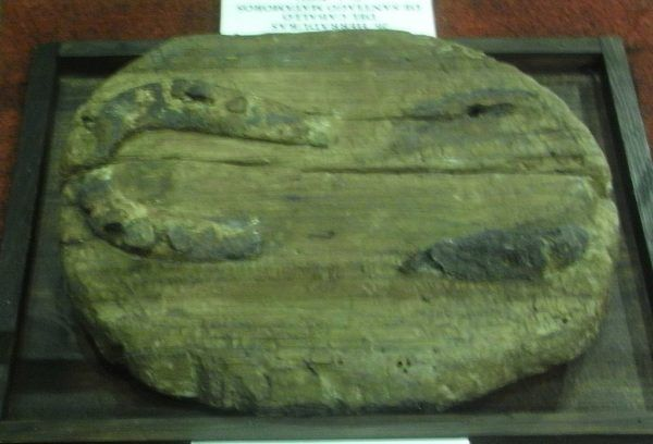 Reliquia de herraduras del caballo de Santiago de la batalla de las Navas de