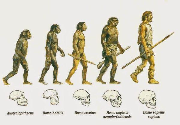 Resultado de imagen de Evolución humana