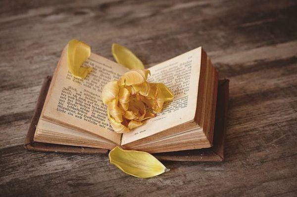 resumen-guerra-franco-prusiana-libro-flor-amarilla