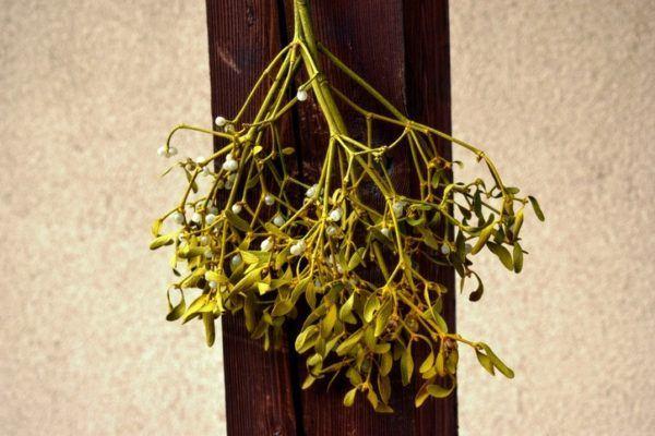 Como poner muerdago en casa decorando ramas