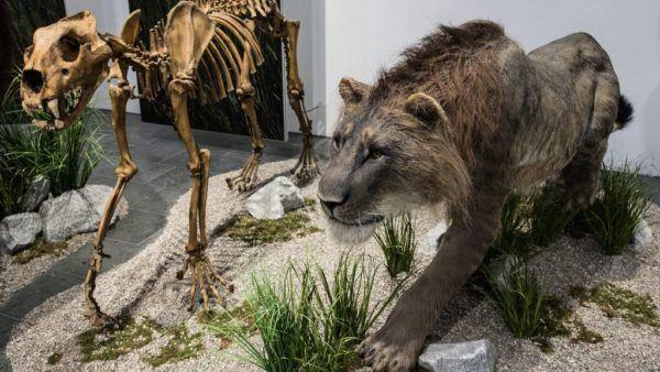 León de las cavernas extinto