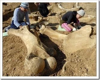 dinosaurios_excavación
